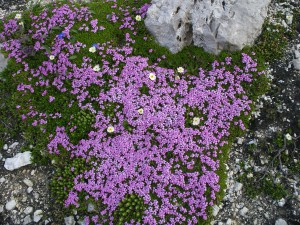 Kurs Botanik Intensiv - die Flora zwischen Rebberg, Föhrenwald und alpiner Landschaft um Visperterminen (VS)