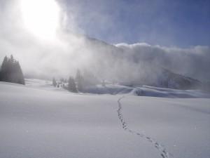 Gemächlich & gemütlich: Naturbeobachtungen auf Schneeschuhtour ab Hotel: Tiere und Pflanzen am Ofenpass
