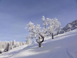 Schneeschuh-Schönwetter-Tagestour am 14. Februar 2020