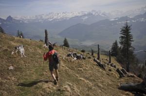 Spontan-Tagestour: Durch den Goldauer Bergsturz zum Gnipen