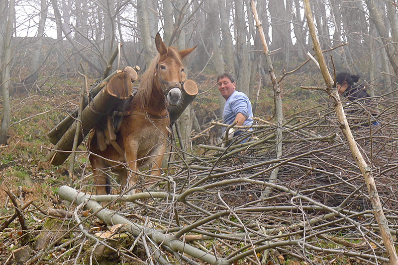 Holzen am Monte Cerreto