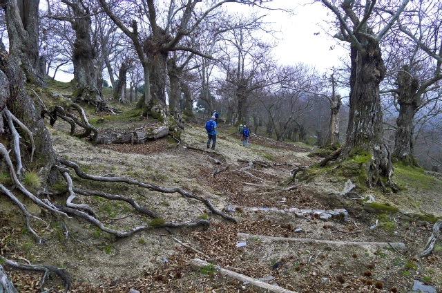 Im Kastanienwald über Ravello