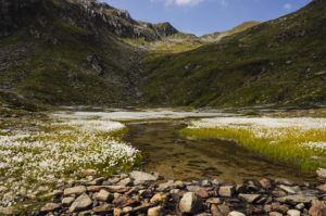 Trekking auf dem Alpenhauptkamm von der Rheinquelle ostwärts in die Greina