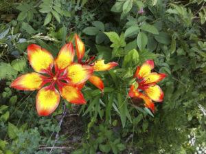 Blumenwanderungen im Unterengadin