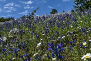 Blumenwandern im Nationalpark Pollino zwischen Kalabrien und Basilicata (I)