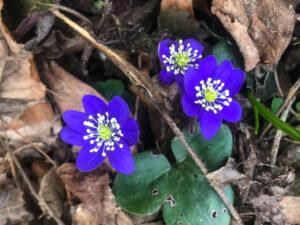 Botanische Wanderungen im Malcantone
