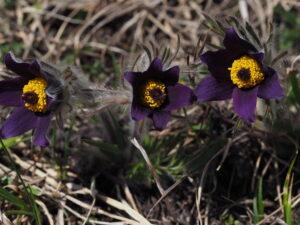 Botanische Wandertage im Mittel- und Oberwallis